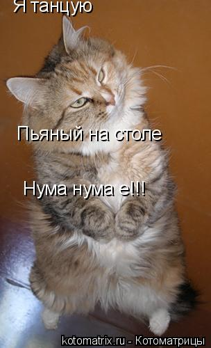 Котоматрица: Я танцую Пьяный на столе Нума нума е!!!