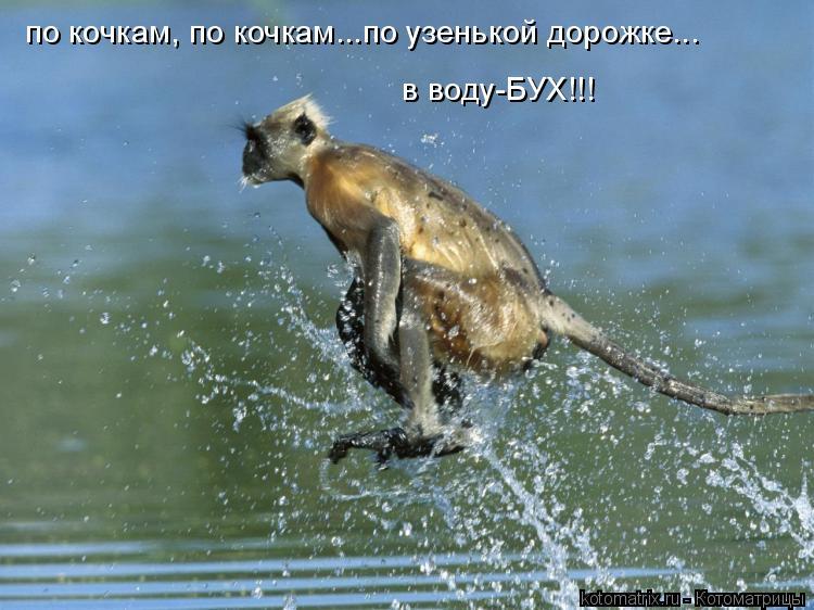 Котоматрица: по кочкам, по кочкам...по узенькой дорожке... в воду-БУХ!!!