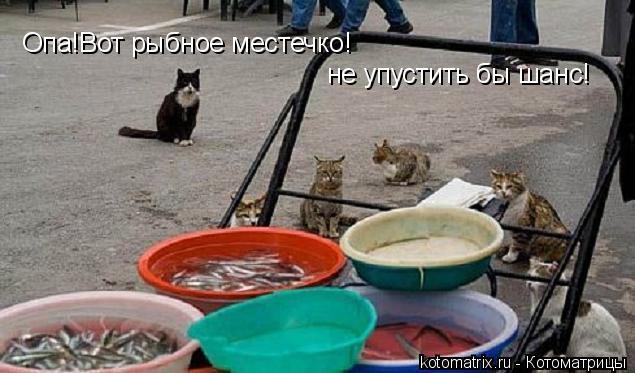 Котоматрица: Опа!Вот рыбное местечко! не упустить бы шанс!