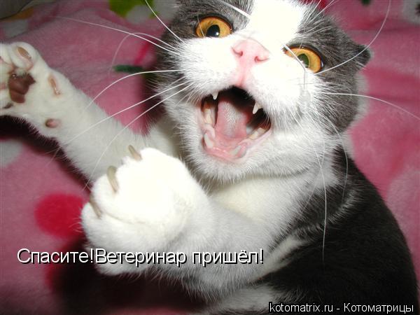Котоматрица: Спасите!Ветеринар пришёл!