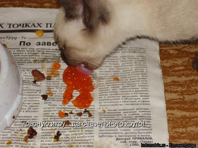 Котоматрица: красную икру....да с газетки-это круто!