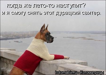 Котоматрица: когда же лето-то наступит? и я смогу снять этот дурацкий свитер.