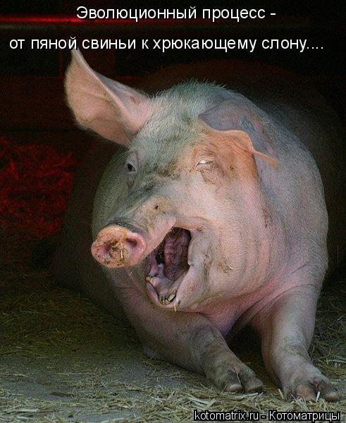 Котоматрица: Эволюционный процесс - от пяной свиньи к хрюкающему слону....