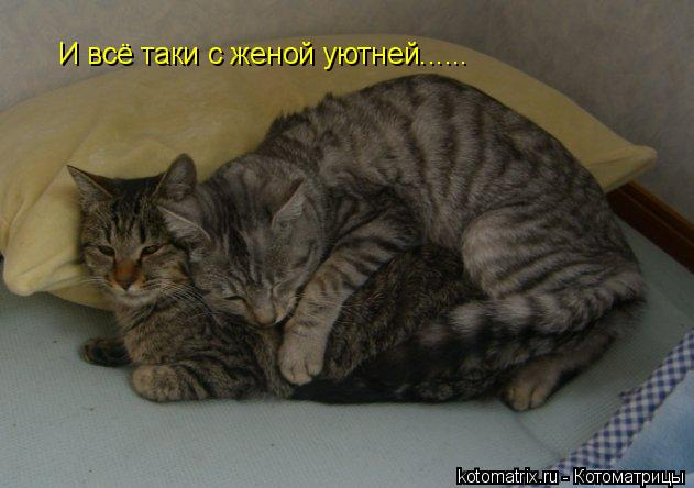 Котоматрица: И всё таки с женой уютней......