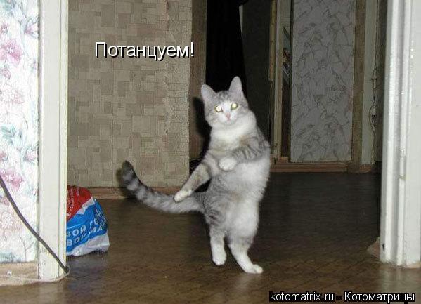 Котоматрица: Потанцуем!