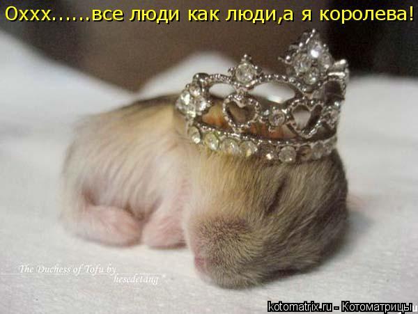 Котоматрица: Оххх......все люди как люди,а я королева!