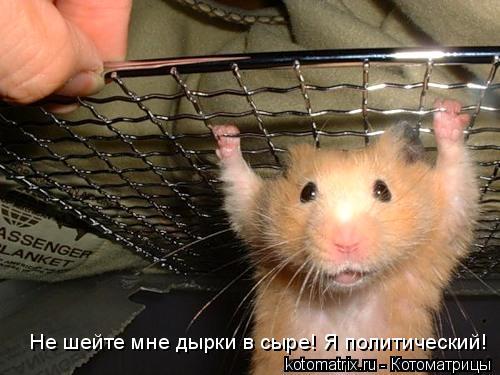 Котоматрица: Не шейте мне дырки в сыре! Я политический!