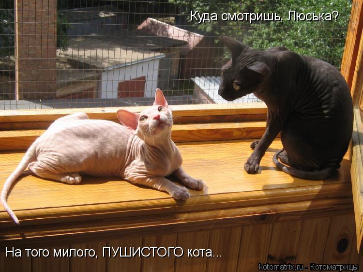 Котоматрица: Куда смотришь, Люська? На того милого, ПУШИСТОГО кота...