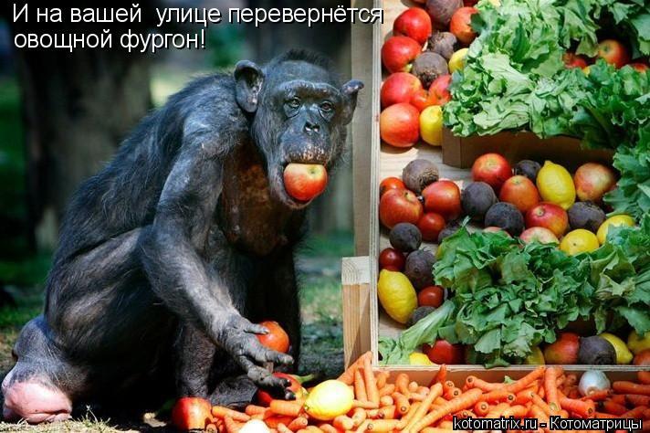 Котоматрица: И на вашей  улице перевернётся овощной фургон!