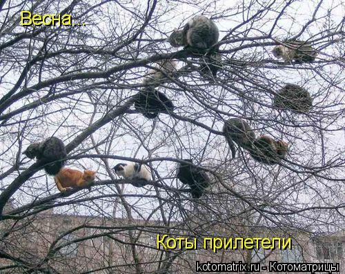 Котоматрица: Весна... Коты прилетели