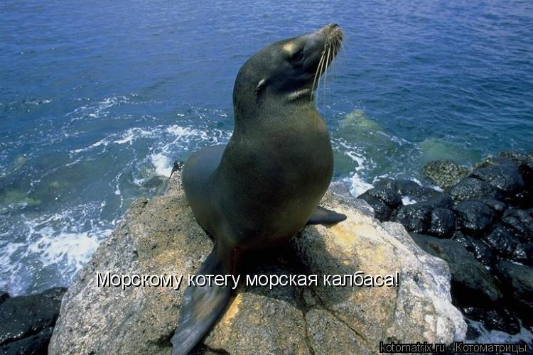 Котоматрица: Морскому котегу морская калбаса!