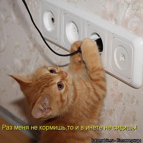 Котоматрица: Раз меня не кормишь,то и в инете не сидишь!