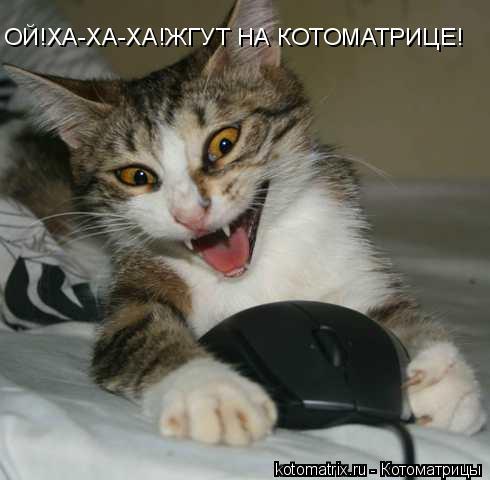 Котоматрица: ОЙ!ХА-ХА-ХА!ЖГУТ НА КОТОМАТРИЦЕ!