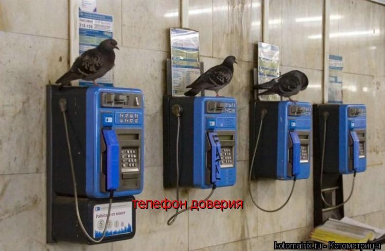 Котоматрица: телефон доверия
