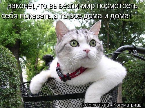 Котоматрица: наконец-то вывезли мир посмотреть себя показать,а то всё дома и дома!