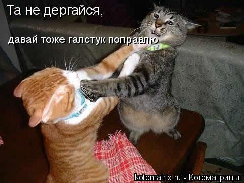 Котоматрица: Та не дергайся, давай тоже галстук поправлю