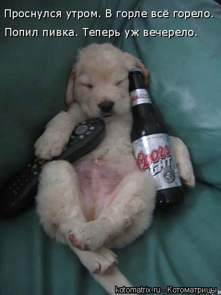 Котоматрица: Проснулся утром. В горле всё горело. Попил пивка. Теперь уж вечерело…