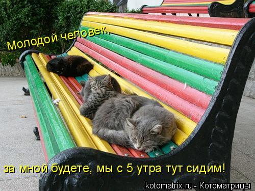 Котоматрица: Молодой человек,  за мной будете, мы с 5 утра тут сидим!