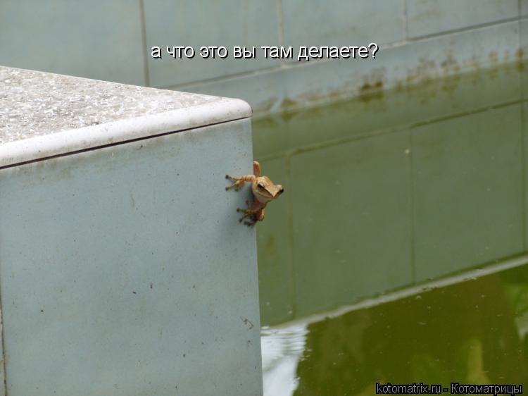 Котоматрица: а что это вы там делаете?