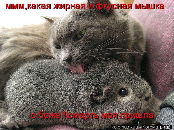 Котоматрица: ммм,какая жирная и фкусная мышка о боже!!!смерть моя пришла