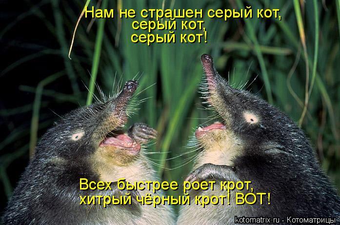 Котоматрица: Нам не страшен серый кот, серый кот, серый кот! Всех быстрее роет крот, хитрый чёрный крот! ВОТ!