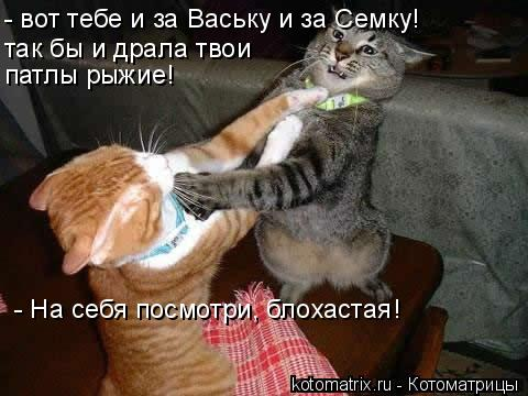 Котоматрица: - вот тебе и за Ваську и за Семку! так бы и драла твои  патлы рыжие! - На себя посмотри, блохастая!