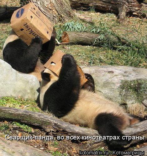 Котоматрица: Сварщик-панда, во всех кинотеатрах страны