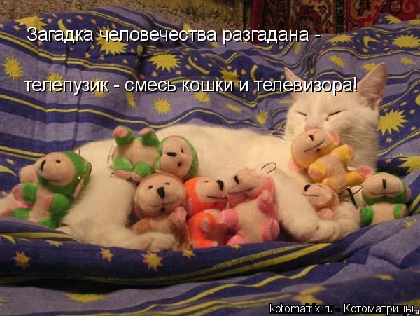 Котоматрица: телепузик - смесь кошки и телевизора! Загадка человечества разгадана -