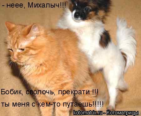 Котоматрица: Бобик, сволочь, прекрати !!! ты меня с кем-то путаешь!!!!! - неее, Михалыч!!!