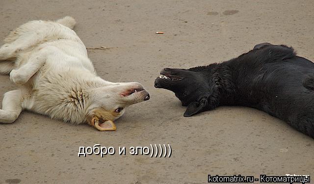 Котоматрица: добро и зло)))))