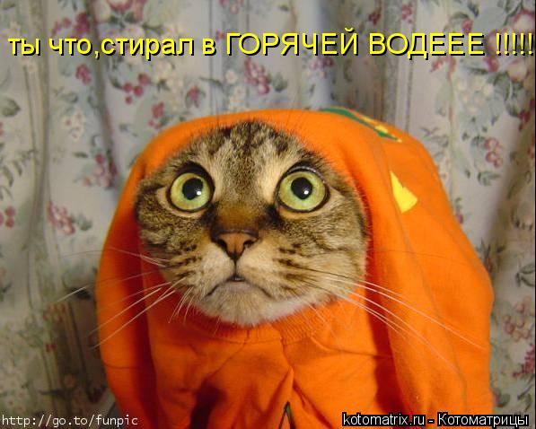 Котоматрица: ты что,стирал в ГОРЯЧЕЙ ВОДЕЕЕ !!!!!!