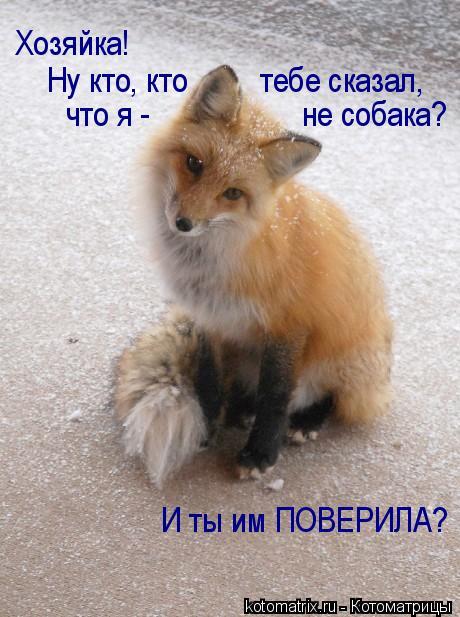 Котоматрица: Хозяйка!  Ну кто, кто         тебе сказал, что я -                   не собака? И ты им ПОВЕРИЛА?