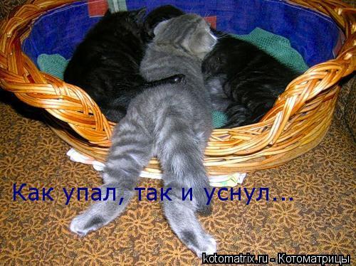 Котоматрица: Как упал, так и уснул...