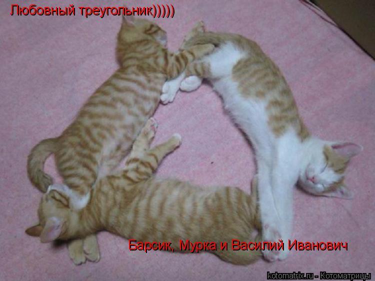 Котоматрица: Любовный треугольник))))) Барсик, Мурка и Василий Иванович