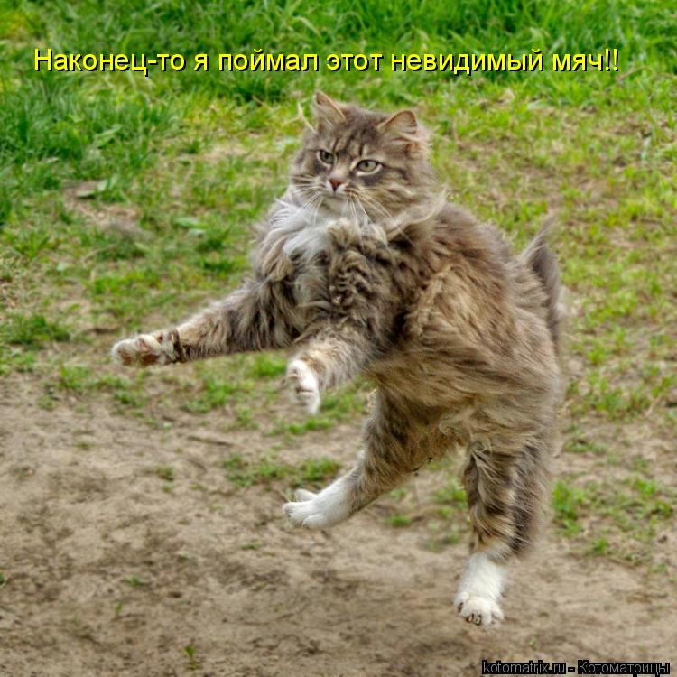 Котоматрица: Наконец-то я поймал этот невидимый мяч!!
