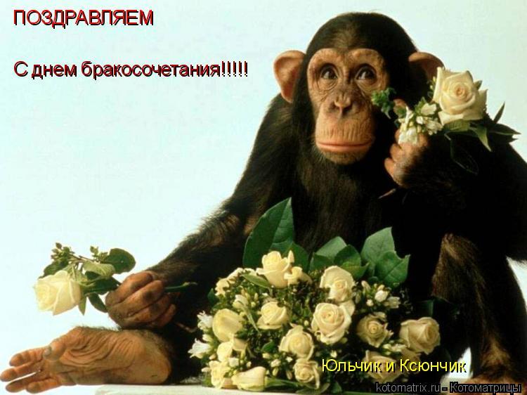 Котоматрица: ПОЗДРАВЛЯЕМ С днем бракосочетания!!!!! Юльчик и Ксюнчик