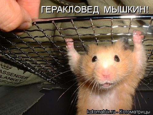 Котоматрица: ГЕРАКЛОВЕД  МЫШКИН!