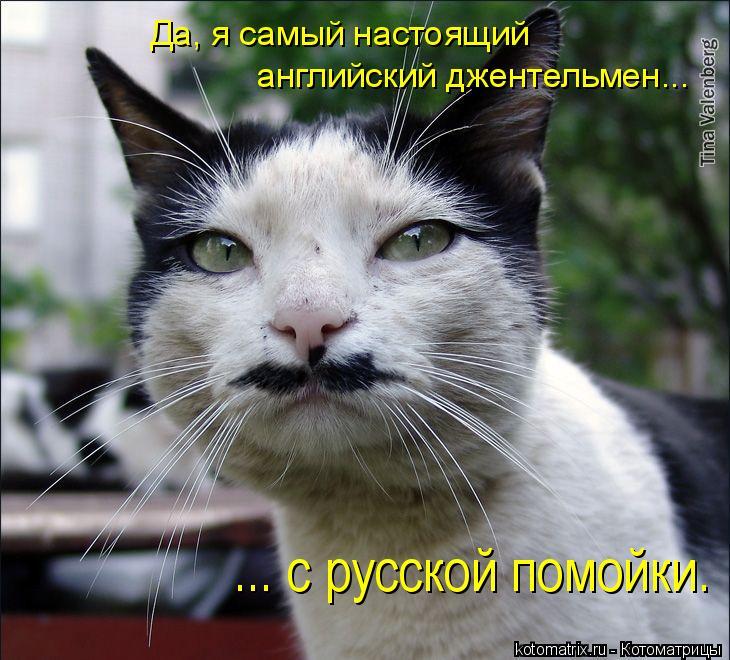 Котоматрица: Да, я самый настоящий  английский джентельмен... ... с русской помойки.