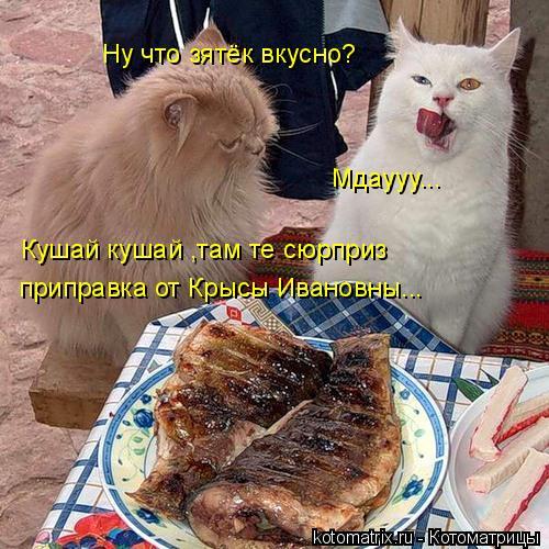 Котоматрица: Ну что зятёк вкусно? Мдаууу... Кушай кушай ,там те сюрприз  приправка от Крысы Ивановны...