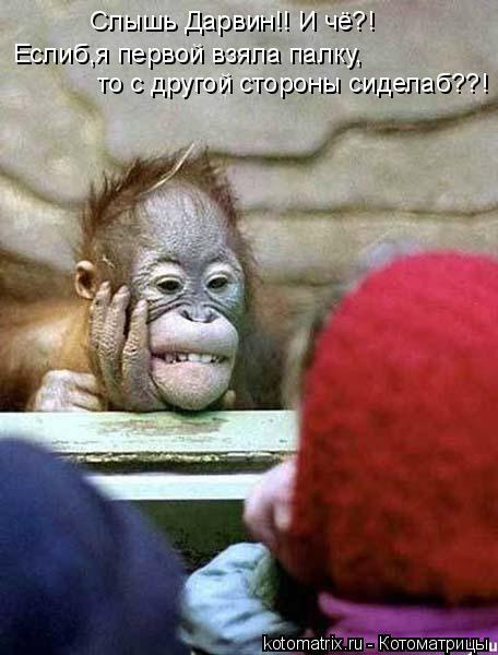 Котоматрица: Слышь Дарвин!! И чё?! Еслиб,я первой взяла палку, то с другой стороны сиделаб??!