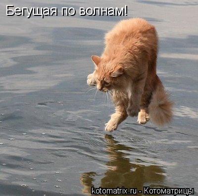 Котоматрица: Бегущая по волнам!