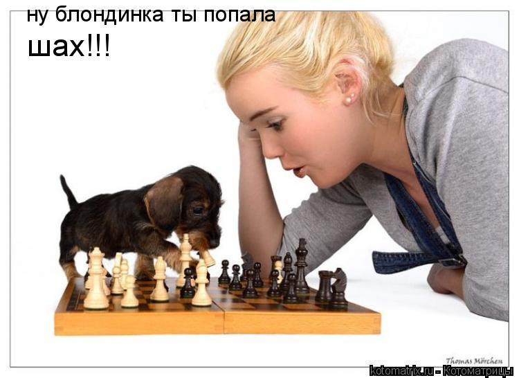 Котоматрица: ну блондинка ты попала шах!!!
