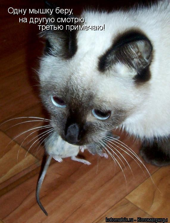 Котоматрица: Одну мышку беру,  на другую смотрю,  третью примечаю!