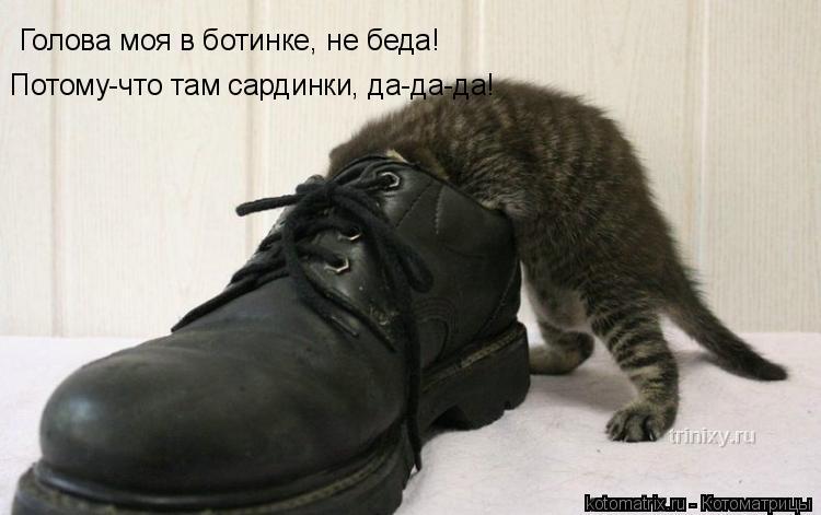Котоматрица: Голова моя в ботинке, не беда!  Потому-что там сардинки, да-да-да!