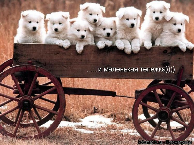 Котоматрица: Вагон.......  ......и маленькая тележка))))