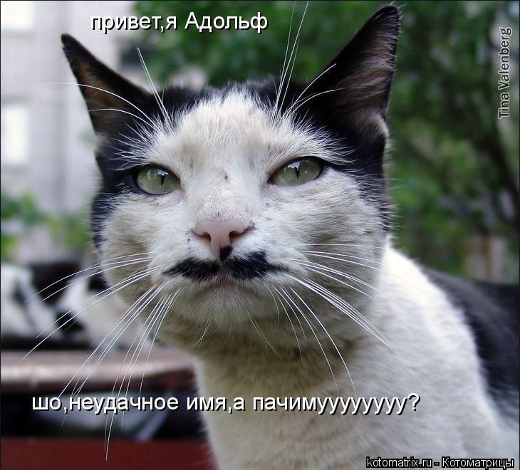 Котоматрица: привет,я Адольф шо,неудачное имя,а пачимуууууууу?
