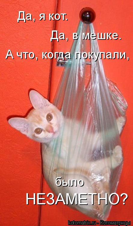 Котоматрица: Да, я кот. Да, в мешке. А что, когда покупали, было НЕЗАМЕТНО?