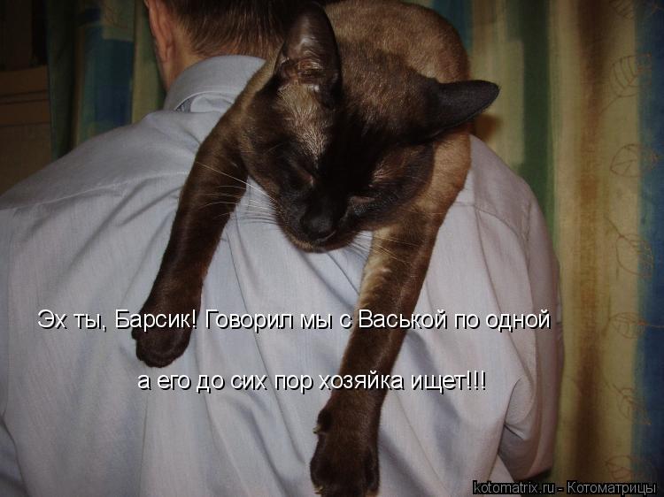 Котоматрица: Эх ты, Барсик! Говорил мы с Васькой по одной а его до сих пор хозяйка ищет!!!