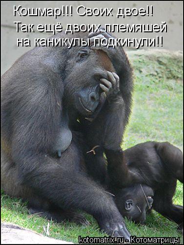 Котоматрица: Кошмар!!! Своих двое!! Так ещё двоих племяшей на каникулы подкинули!!