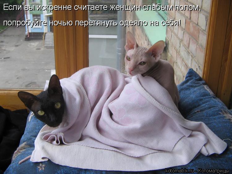 Котоматрица: Если вы искренне считаете женщин слабым полом,  попробуйте ночью перетянуть одеяло на себя!